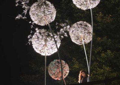 Giant Dandelions