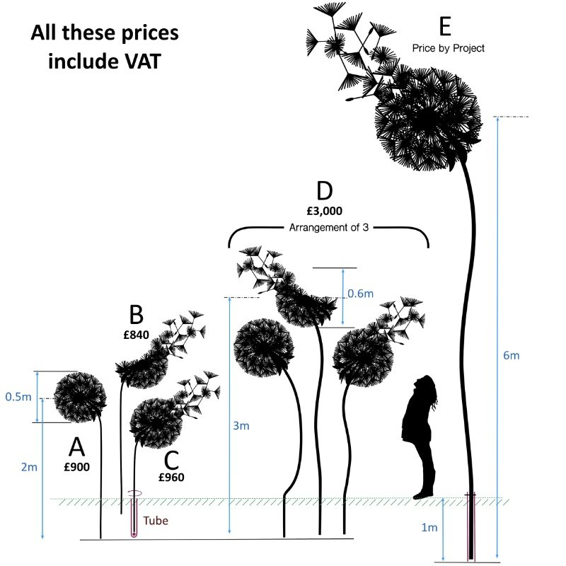 dandelion sizes